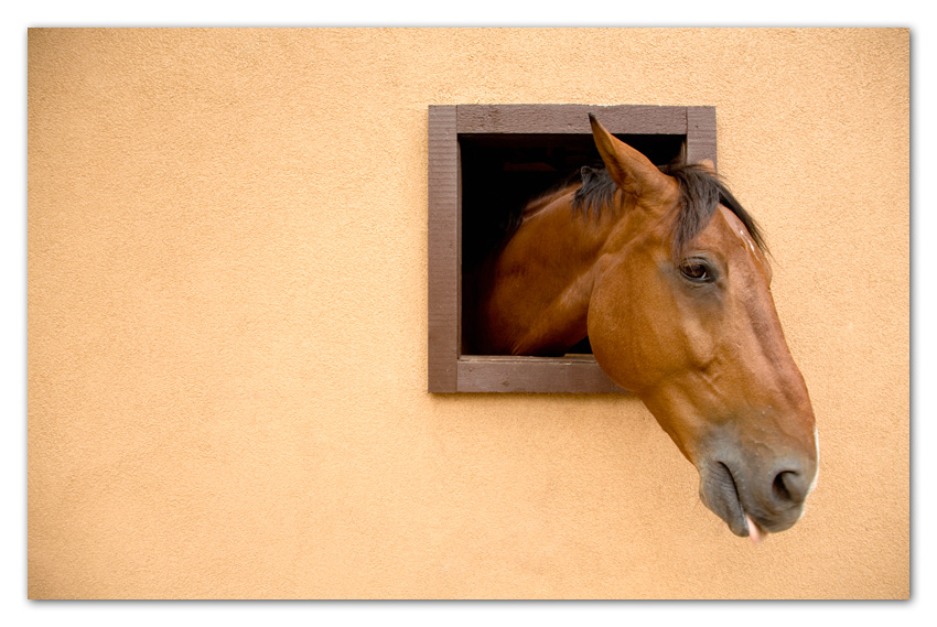 Horse poking head through barn window Flagstaff Arizona