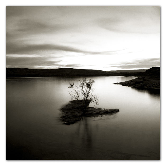 Tamarisk Tree and Lake Powell Page Arizona