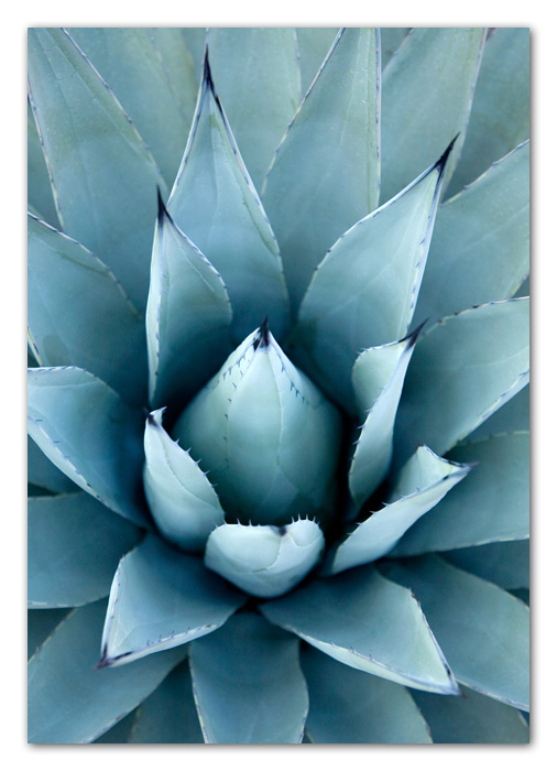 Close Up of Agave Cactus Sedona Arizona
