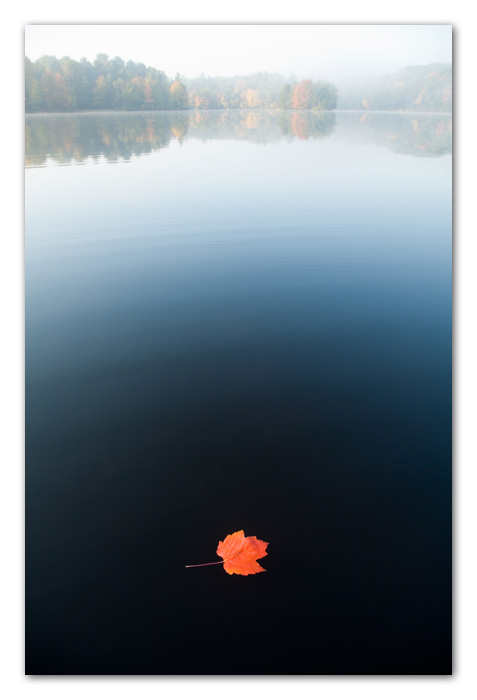 Maple Leaf on Lake Water at Dawn Ashburnham Massachusetts