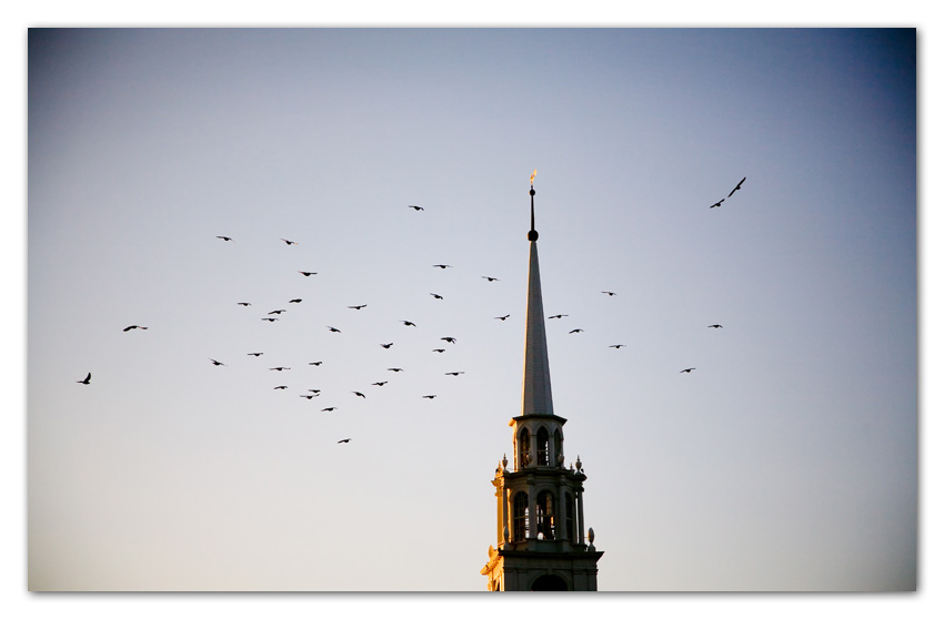 Doves Flying over Church Massachusetts