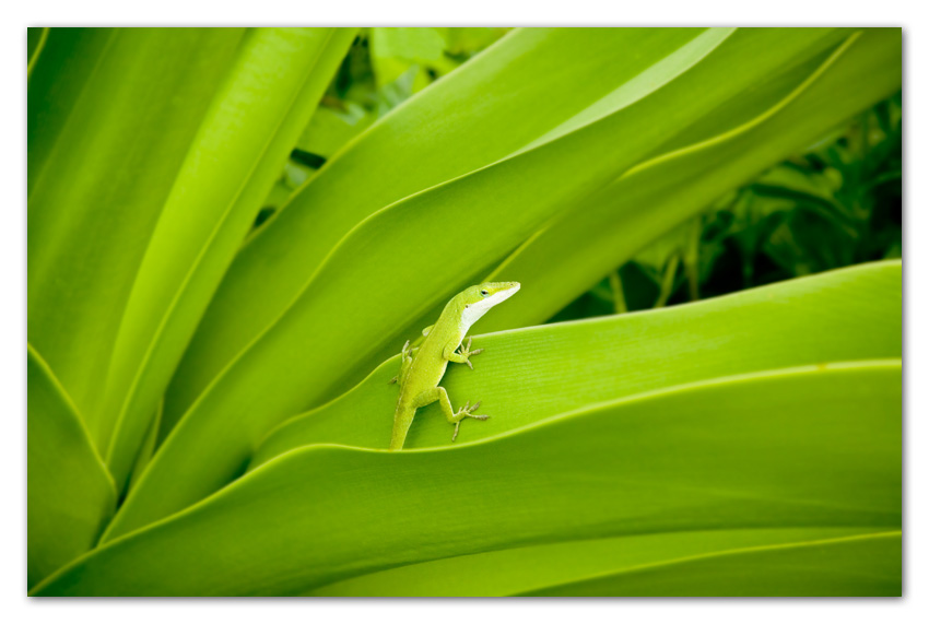 Gekko on tropical plant Kapaa Kauai Hawaii