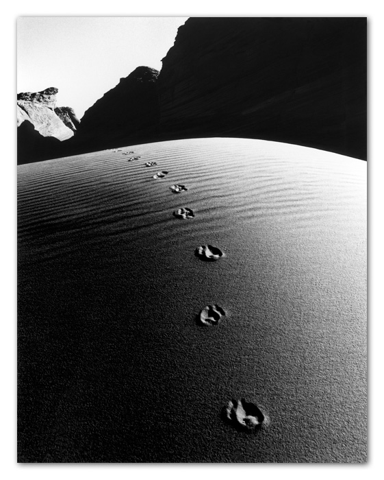 Fox Footprints on Sand Dune Tuba City Arizona